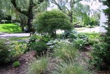 Planting Combinations