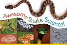Homeschool- Science / by April Smith