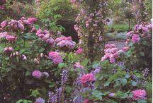 Garden Roses Extrodinary Flowers / by Vintage Patterns Dazespast