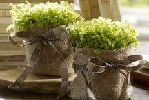 flowers / Flowers jars pots