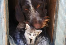 Animals and Pets / All about animals,  travel with animals,  and ethical animal experiences around the world