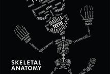 Interessi-anatomy
