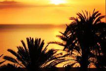 Poda de palmeras en Torremolinos, Mijas, Fuengirola. / Podas de palmeras en Torremolinos, Málaga y Costa del Sol. ESPECIALISTAS EN PODAS EN ALTURA de palmeras y árboles. Expertos profesionales con seguros de responsabilidad y a precios económicos. Recogemos, limpiamos y nos llevamos todos los restos de poda. Nuestros clientes principales son: comunidades de vecinos, hoteles, empresas, particulares. Presupuesto sin compromiso. TLF.: 678 052 042    biznagarden@gmail.com