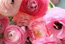 květena ...