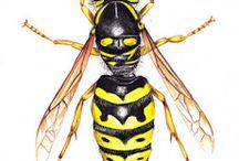 Biological illustrations