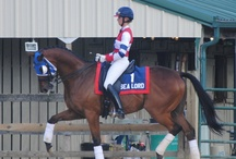 OTTB  / by Kim Johnson Siebert