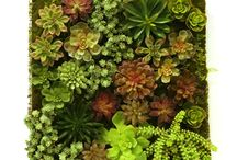 Succulents / Artificial succulents--great for contemporary settings and  commercial offices. Unlimited design possibilities with an array of colors, sizes, types and structures. Unmatched realism.