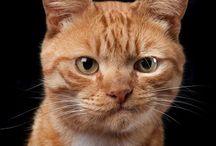 kočky/ cats