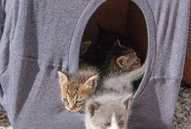 kittens/katten DIYs