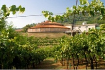 Our Winery / Nature, silence and wine...