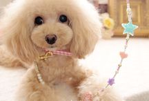 Toy Poodle Grooming (and some other things too) / by Katie Ziegler