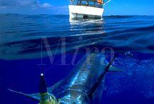 Davids Deep-Sea Discoveries