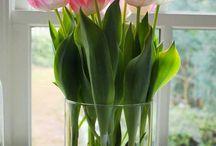 plantas para dentro e fora de casa