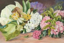 Marianne North / Victorian paintor and  explorer