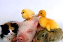 Cute Little Friends / by Stephanie Clark