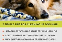 Dog Hair, Kinda Care / Tips and tricks to survive the dog fur to have a clean and organized home.