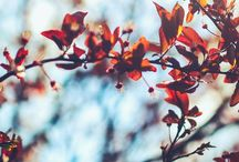 Kauniita kuvia