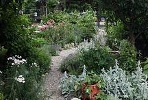 gardening and summer / by Jennifer Rudnick