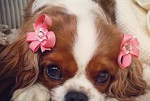 Cute pupies
