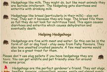 Useful Wildlife Information