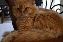 Catsito / #Gato #cat