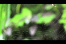 Orkin's Bug Wisdom / At Orkin, we never stop learning from bugs. Watch these videos for some of the wisdom we've gathered from our six- and eight-legged counterparts. / by Orkin Pest Control