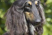 Hunde Rasse Kalender 2017