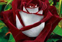 wyjatkowe kwiaty