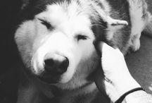 pet-love