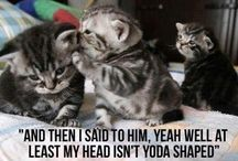 Funny Cats / Cats, kittens <3