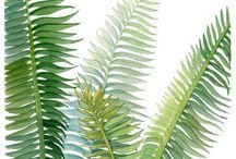 Карты с растениями