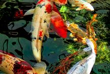 Koi and ponds / Paintings, glass, garden depictions