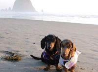 Dog Friendly Travel / Traveling with your dog is fun! This board includes travel tips, hacks, hotel and retaurant guides, and trip reports for cities/regions in the US and Canada... and sometimes beyond.