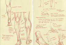 anatomy & gesture