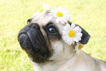 Fotos perro