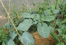 Agribusiness  / by Kosgei Isaac