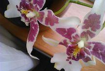 orchideen / mooie orchieen