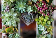 Növények és kertészet