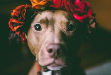 Dogs photos inspo & DIY for them