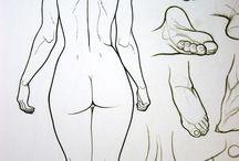 Anatomie Morpho