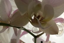 Beautiful Orchids / Orchids , my passion