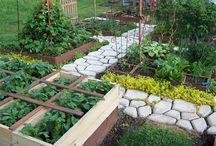 veggie garden/herb garden