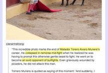 Animals saving man