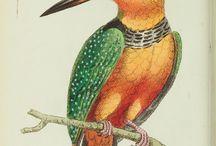 Les oiseaux photo / dessin