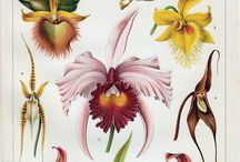 ARTWORK - Celebrate life and art with orchids / Art