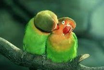 parrots / Cute and fantastic parots
