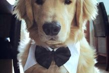 Dog Wedding suits