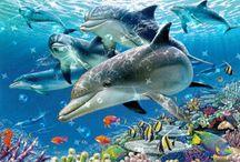 Animacje zwierzęta - rybki