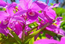 Costa Rica's flora / Costa Rica's most beautiful flowers, trees,etc...