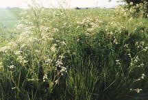 wiosna natura